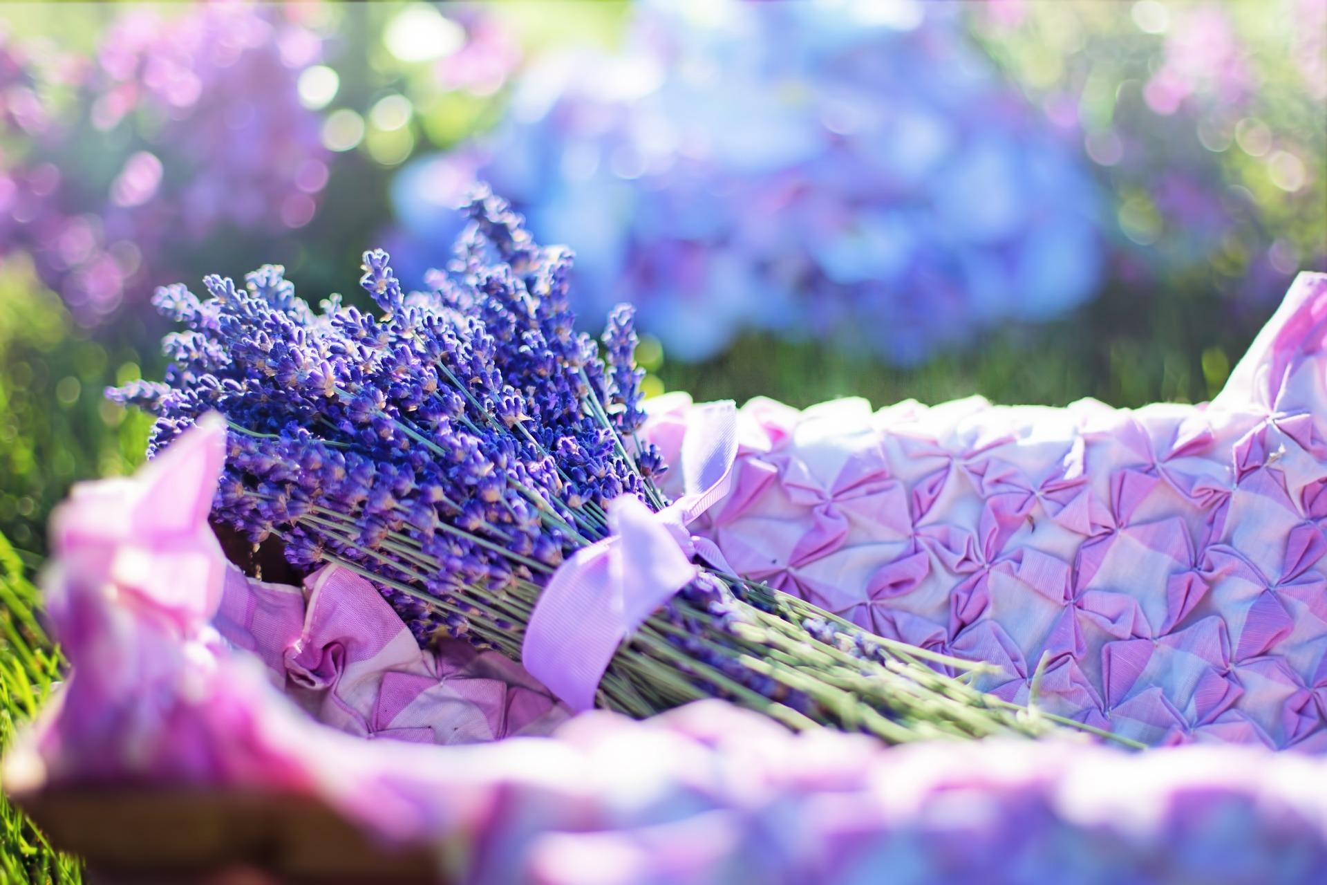 Lavendel abnehmen
