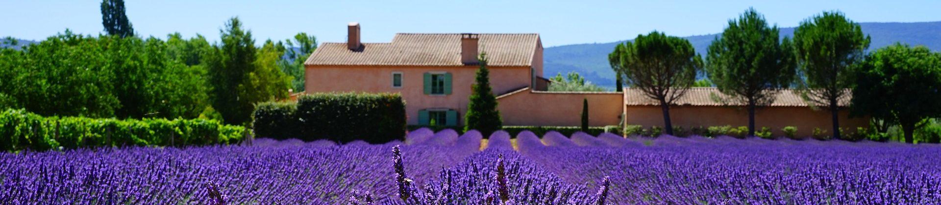 Kategorie: Lavendel