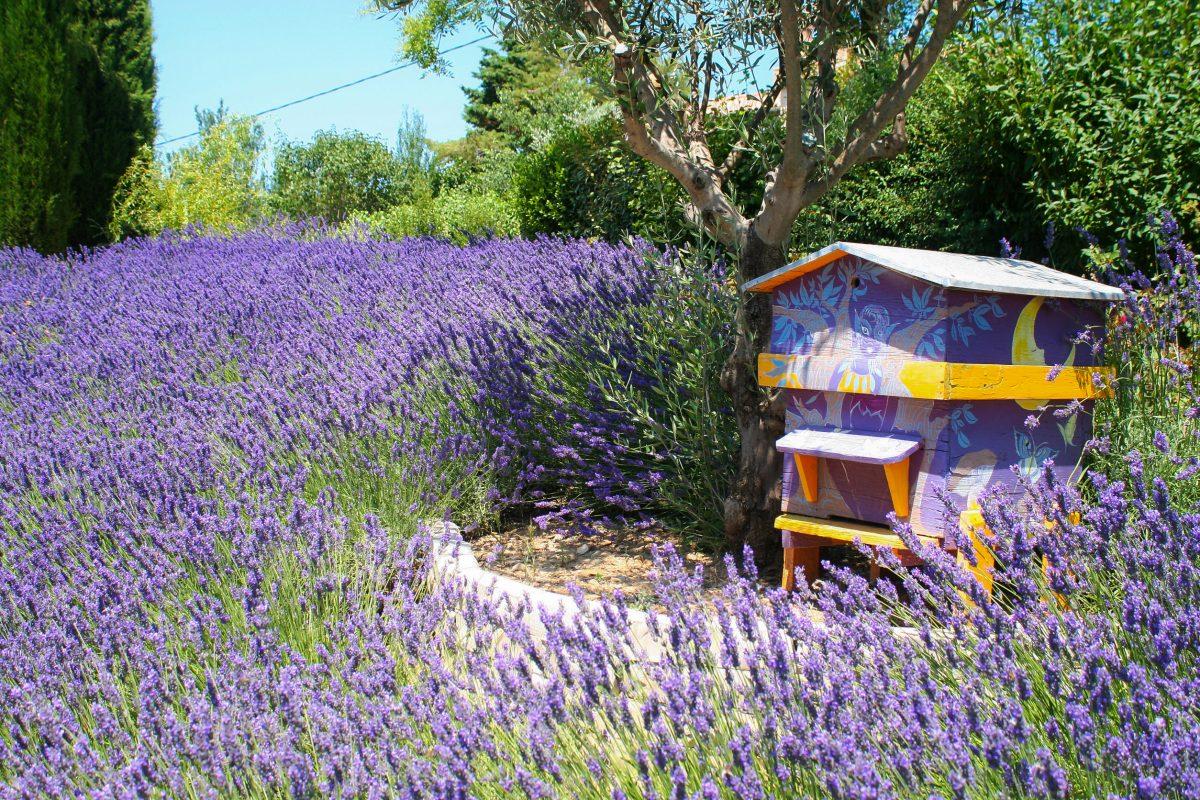 Was ist eine Bienen-Patenschaft?