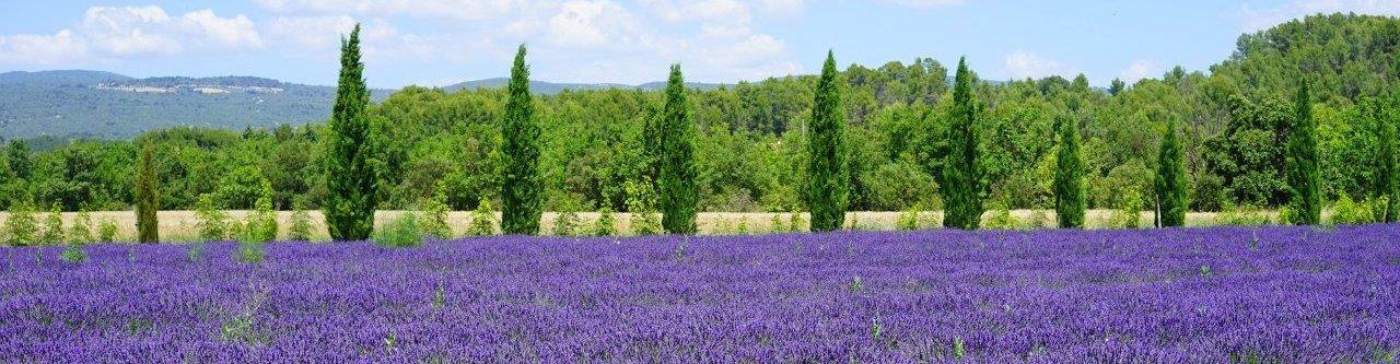 Provence Lavendelhonig