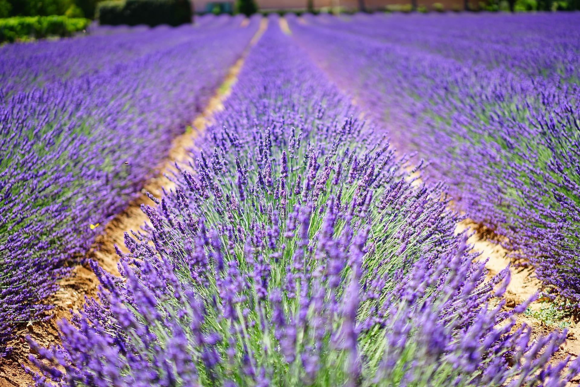Das blaue Wunder der Provence