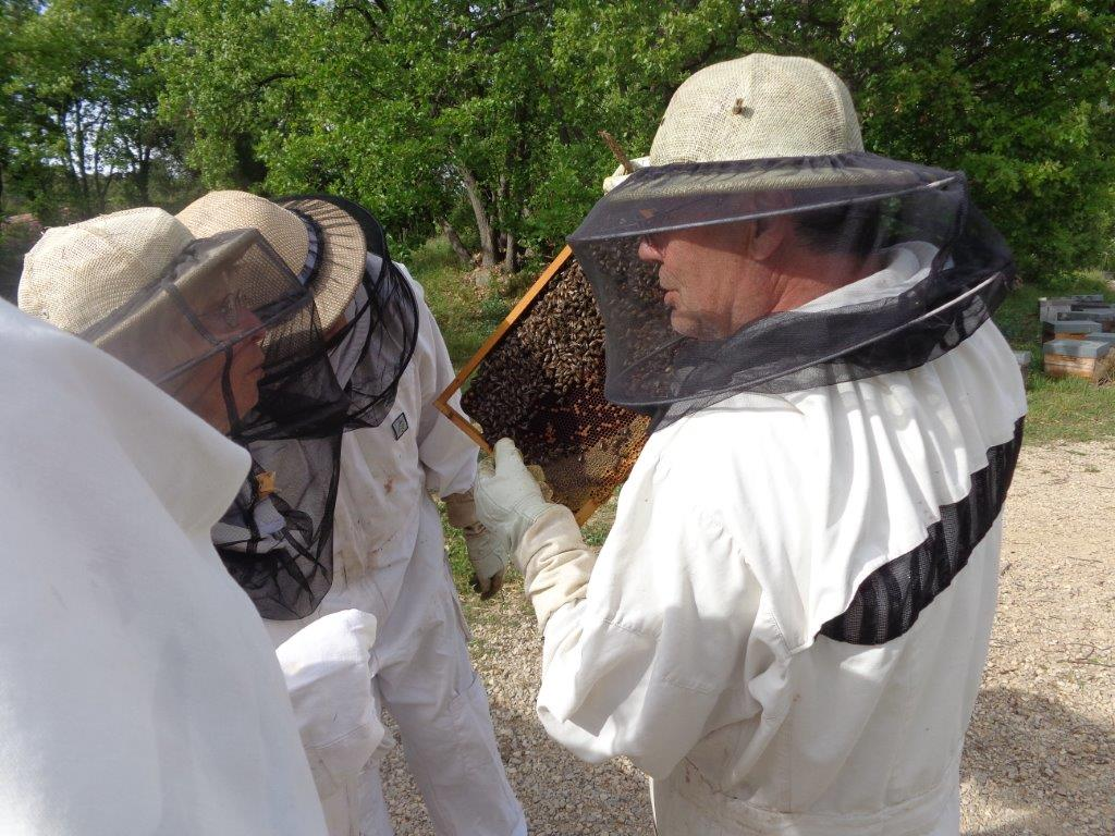 Die Welt ein Stück weit besser machen – die besondere Bienenpatenschaft