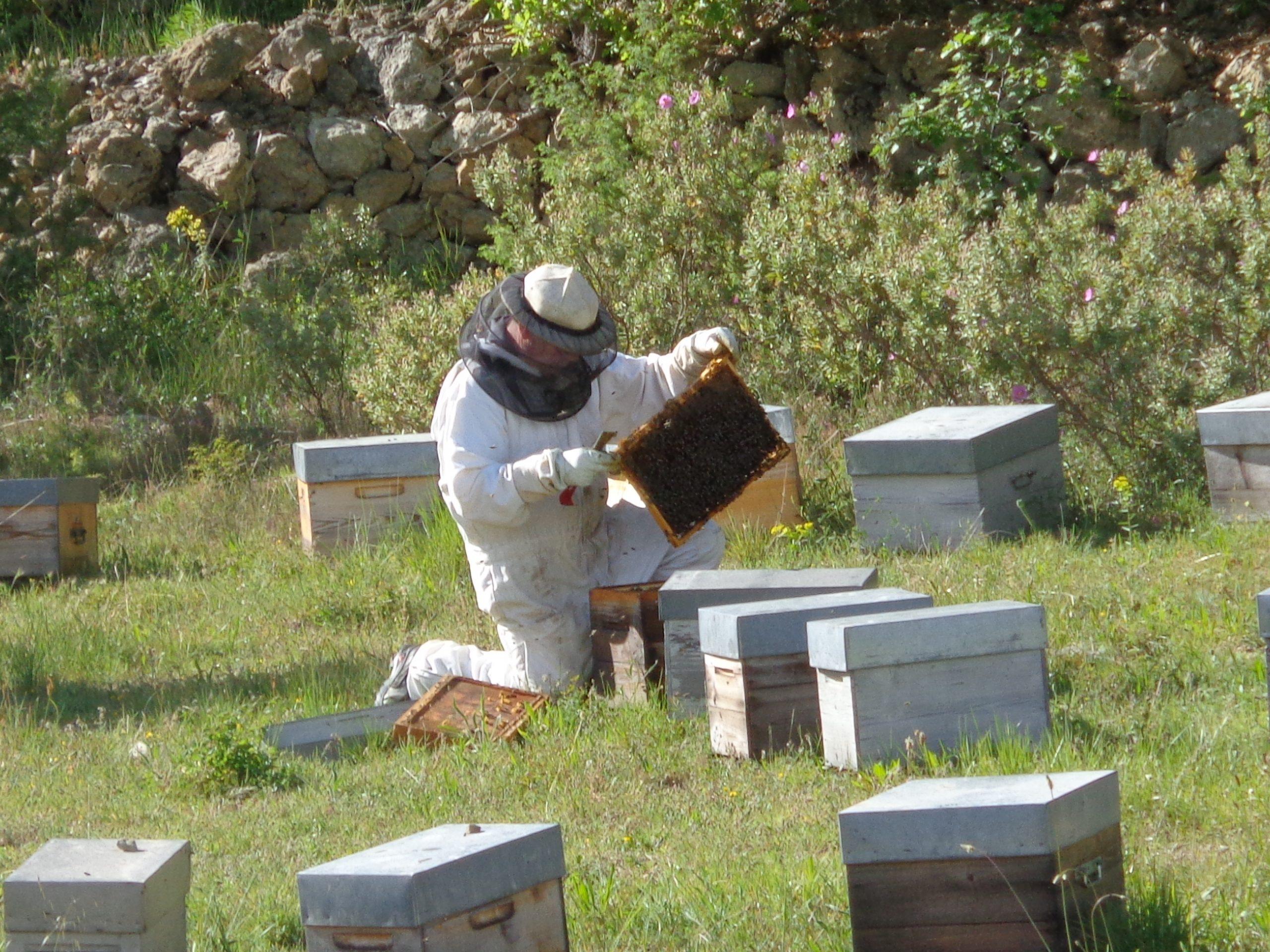 Neuigkeiten zu unserem Bienenprojekt 2020