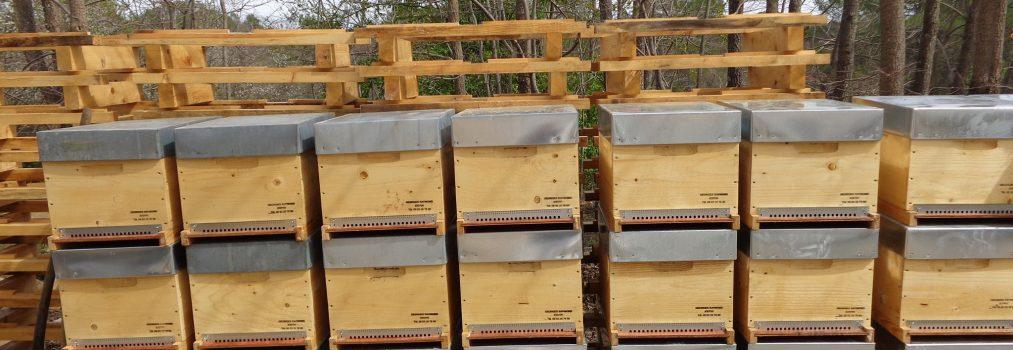 Der Weg der Bienenkönigin